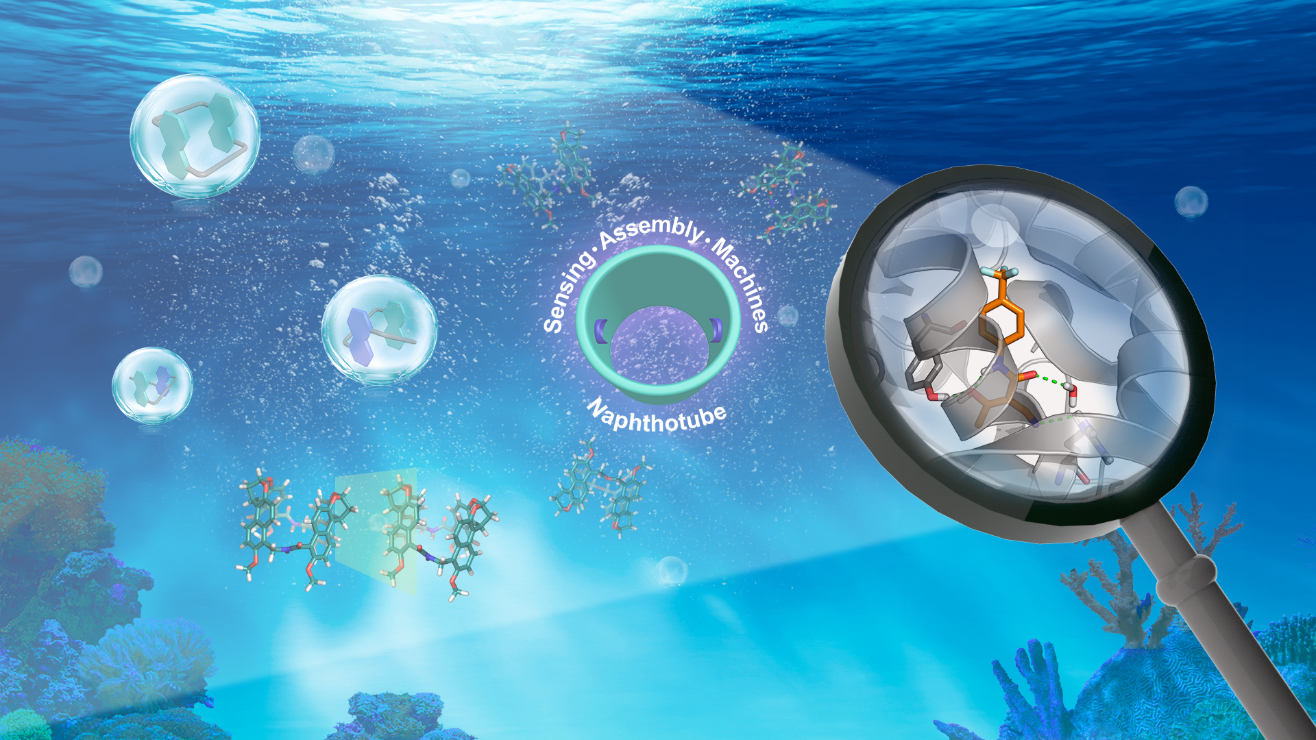 SUSTech chemical researchers make progress in biomimetic molecular recognition
