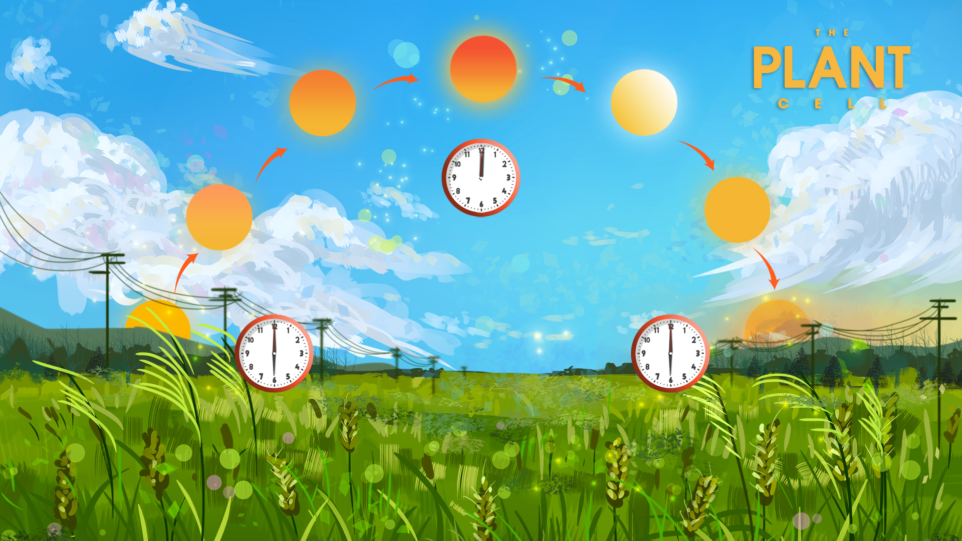 Novel mechanism found, showing how plants grow using circadian clock