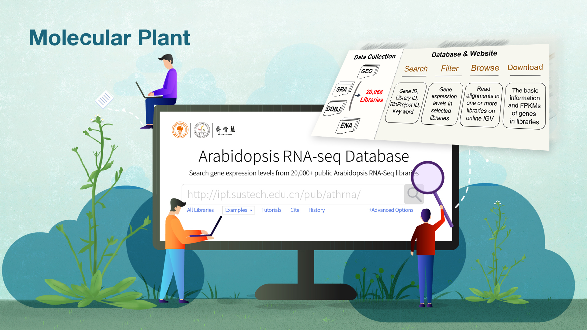 Comprehensive online database deployed for exploring massive public plant RNA-seq data