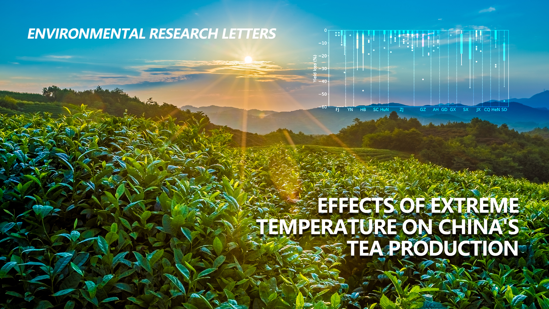 SUSTech's Zheng Chunmiao co-leads international collaborative research that uncovers extreme temperature strikes on China's tea production