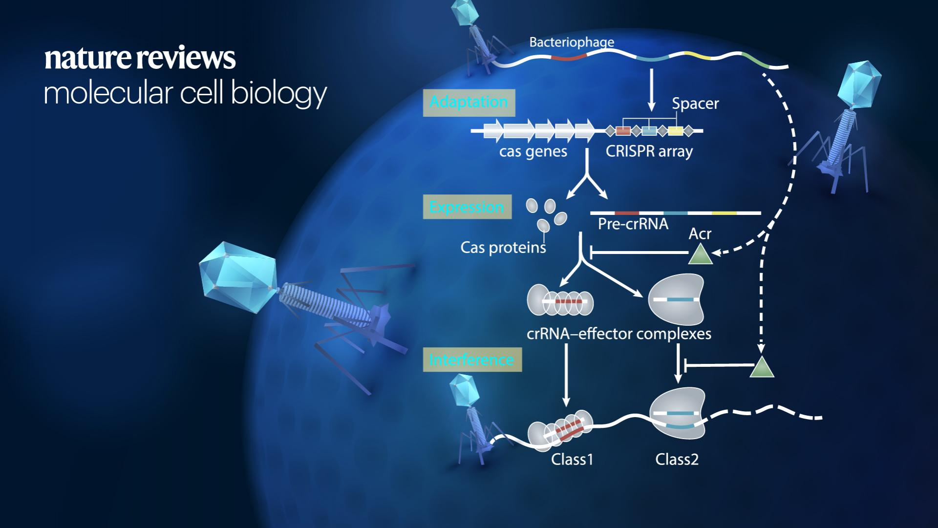 SUSTech's Ning Jia et al. publish research review about mechanisms and biotechnology applications of anti-CRISPR proteins